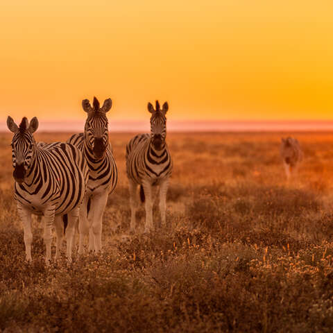 Africa & Safaris