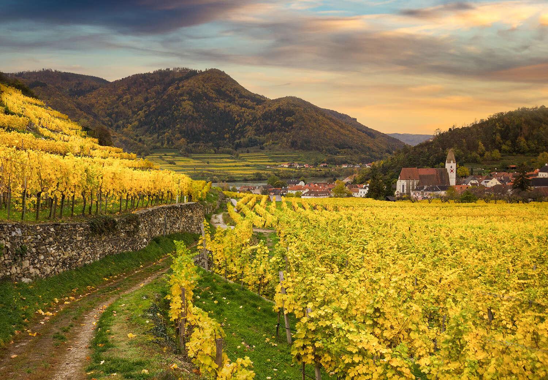 Austria Wine