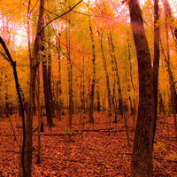 Why Are We So Enamoured of Fall Foliage?