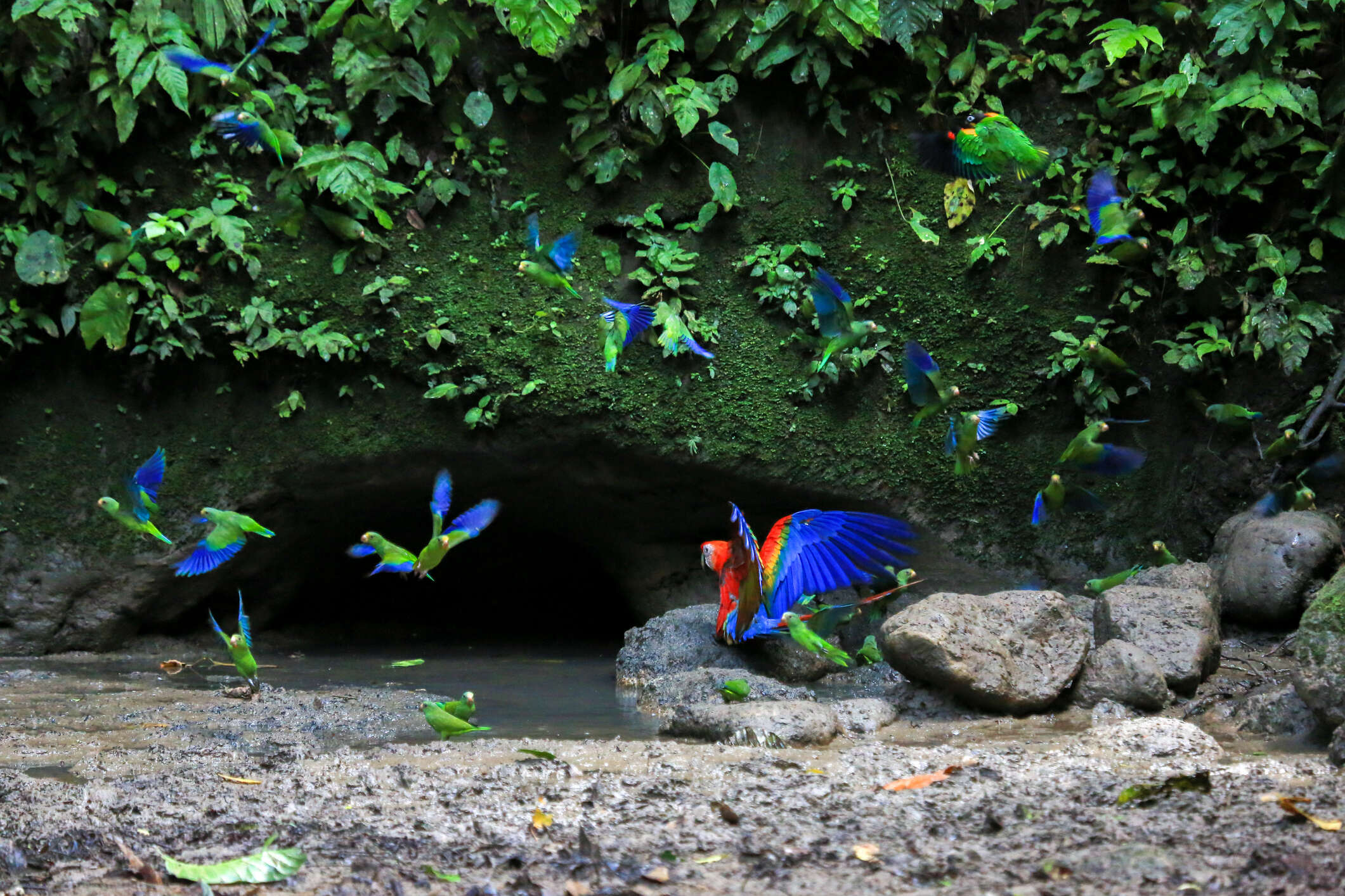 April 16 / Tena – Itamandi Amazon Eco-Lodge
