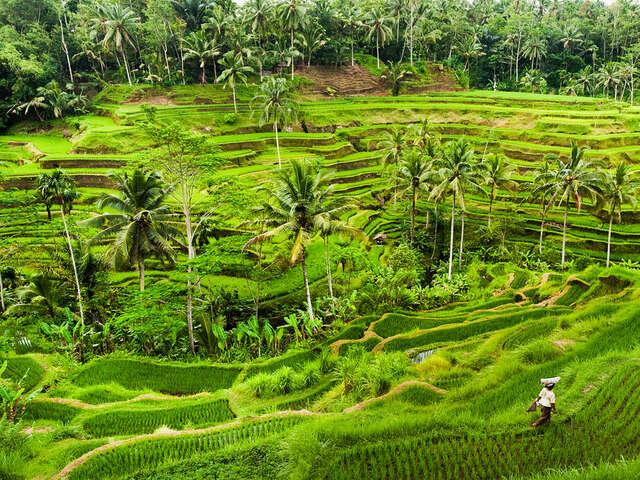 Bali: Yoga, Culture & Beach Exploration
