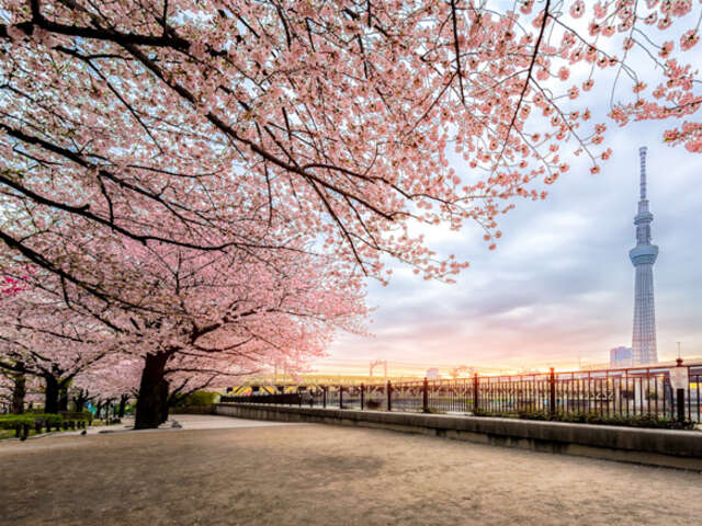 Japan Cruise & Stay