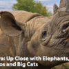 New! Nat Geo Conservation Africa Expedition: Elephants, Rhinos and Big Cats