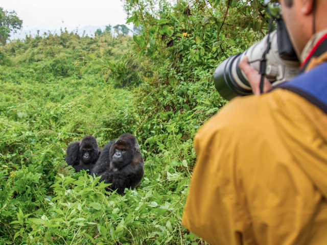 World Gorilla Day: 3 Things a Travel and Animal Lover Can Do