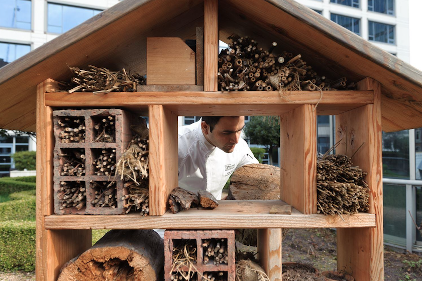 These 'Hotels' are Full of 'Guests' Throughout Pandemic - Part of Fairmont's 'Bee Sustainable' Program
