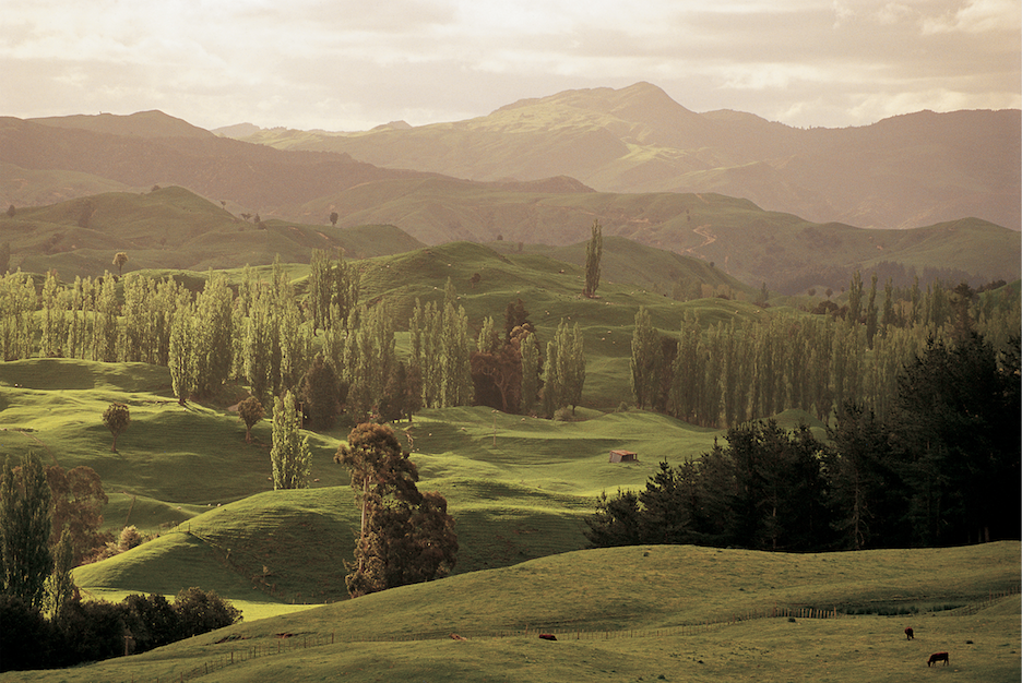 Wish Away the Worst of 2020, Give Thanks, and Plant Hope - Tourism New Zealand's Forest Initiative