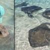 Meet the Stingray Whisperer of the Bahamas