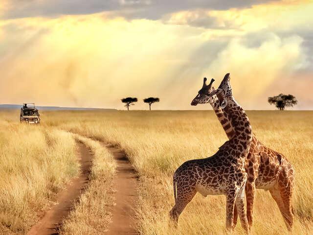 Africa & Safari
