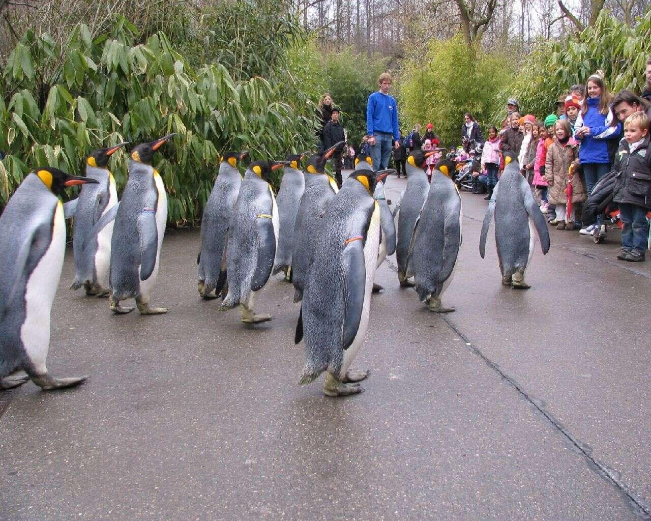 Get into the wild, Zoological Garden (Zoologischer Garten)