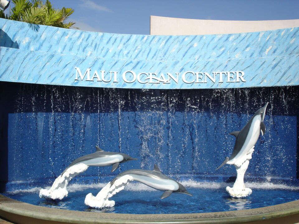 Dive into the Open Ocean Exhibit at the Maui Ocean Center