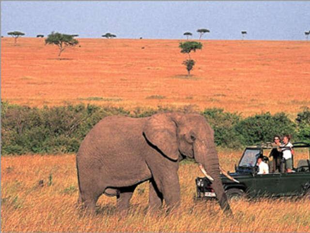 Meet Africa's wildlife on a Safari in Kenya