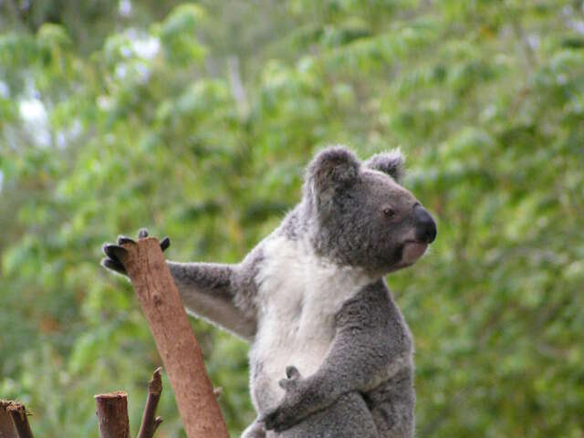 Enjoy a Sydney Blue Mountains Nature and Wildlife Day Tour