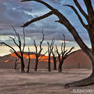 NAMIBIA & KALAHARI DESERT April 21-May 9, 2014