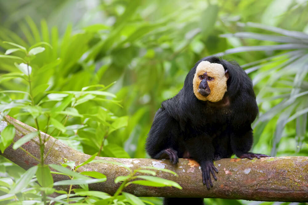 10 interesting facts about the Amazon Rain Forest