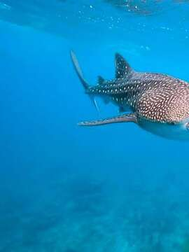 From Diving to Jungle - Belize Has It All!