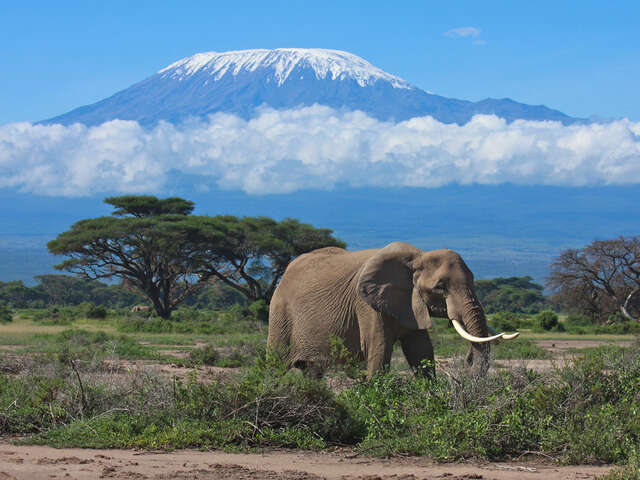 Things To Do When On An Adventure Tour In The Amboseli National Park