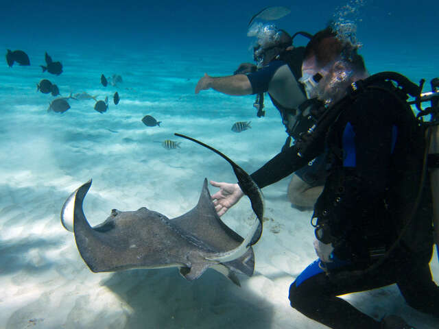 Top 5 Shore Excursions in Grand Cayman