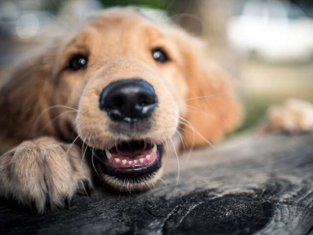 Top ten dog friendly cities in the USA
