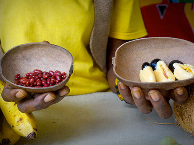About Rastafari Indigenous Village