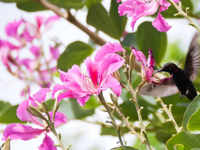 Jamaica's National Bird