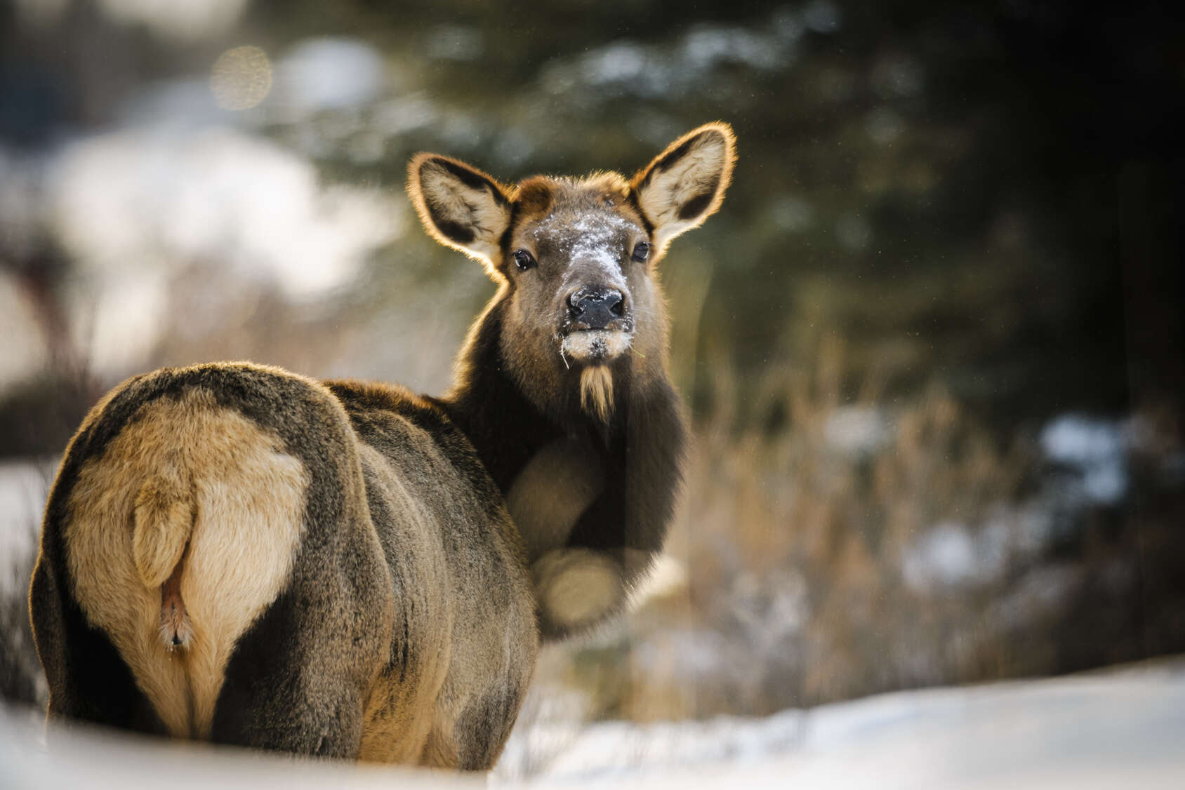 Top 50 Silliest Questions Asked By Tourists at Banff National Park