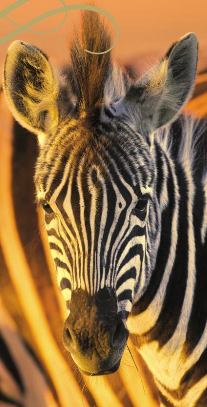 Oceania: Winelands & Wildlife Safari