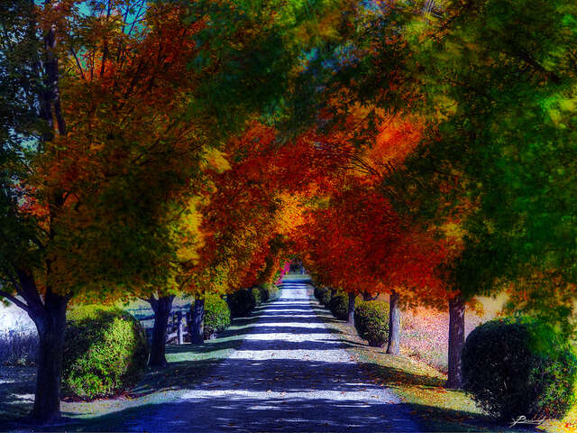 The Top 5 Fall Foliage Destinations
