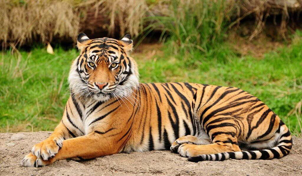 14 Days IN SEARCH OF THE TIGER