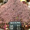 Rose salt provence market BestTrip.TV.png