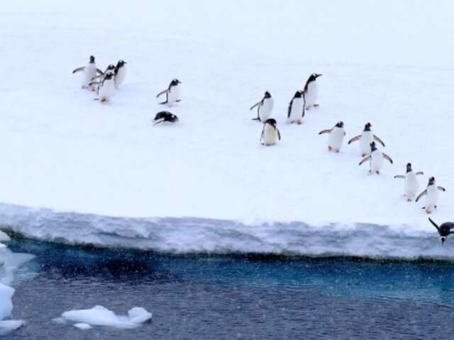 Quark Expeditions - Antarctic Deals
