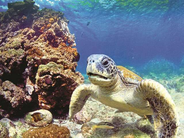 Save $100 in the Galapagos!