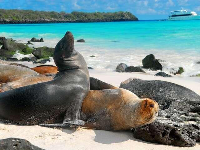 Galapagos & Ecuador Tour