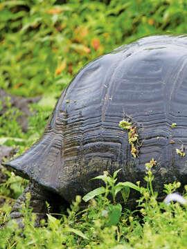 7-Night Galapagos Inner Loop