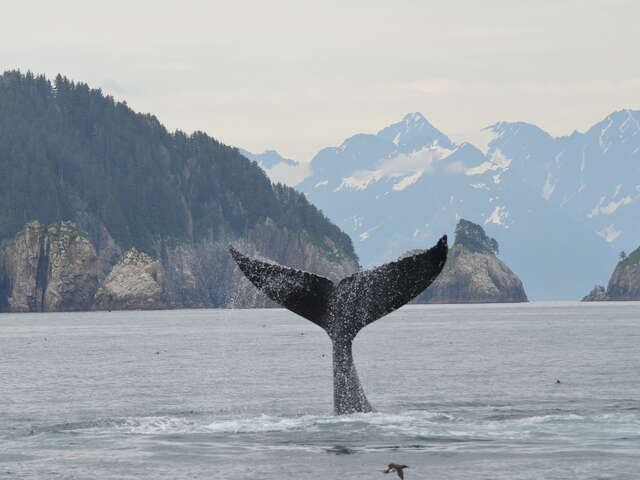 whale.jpg