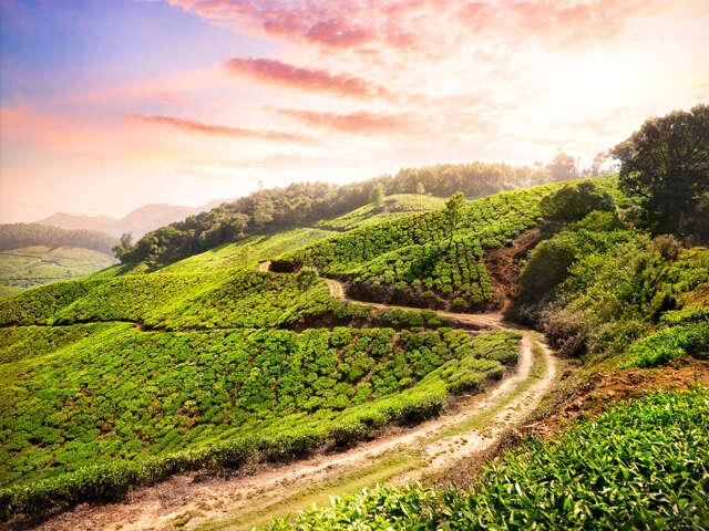 Kerala_web_03.jpg
