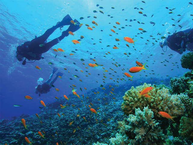 Roatan A diving mecca with Transat