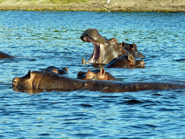 Botswana & Victoria Falls ~ August 18-23, 2018 - 6 Days