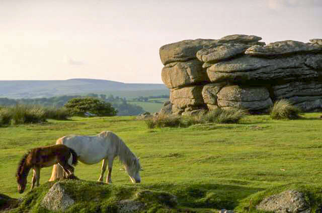 Plymouth - Dartmoor NP
