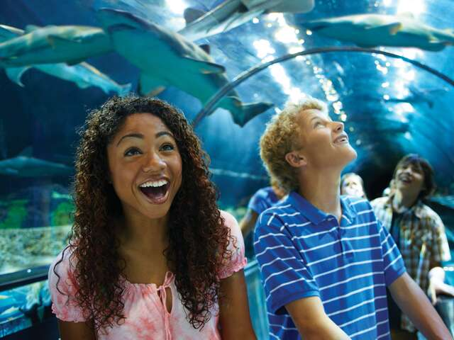 WestJet Vacations - Canadian Residents save at SeaWorld Parks Orlando!