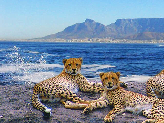 Save $100 per person on South Africa with Tourcan Vacations