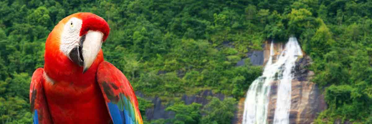 SAVE $400 on the Amazon with Crystal Cruises