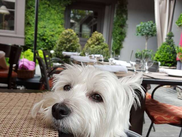 Dogs Welcome in Captivating Carmel-by-the-Sea