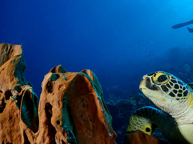 Receive $100 USD Resort Credits with Fly & Sea Dive Adventures
