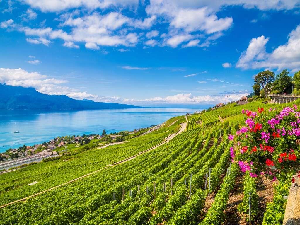GRAPE ESCAPES - Ultimate French Wine Tour