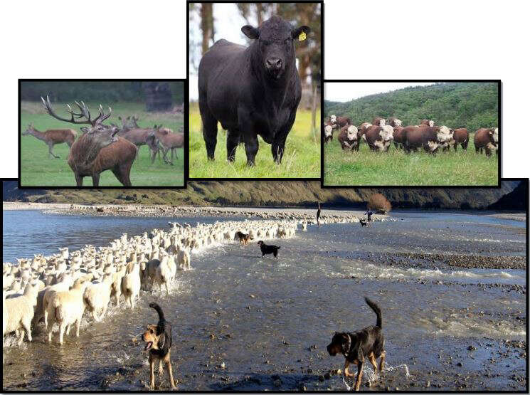New Zealand Agricultural & Sightseeing Tour