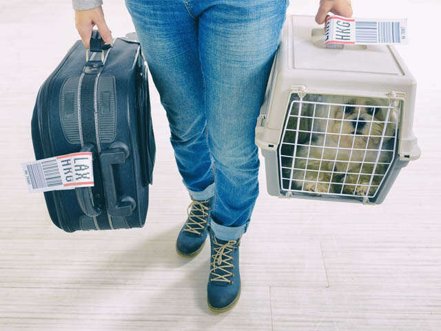 Delta updates policy on support animal effective July 10