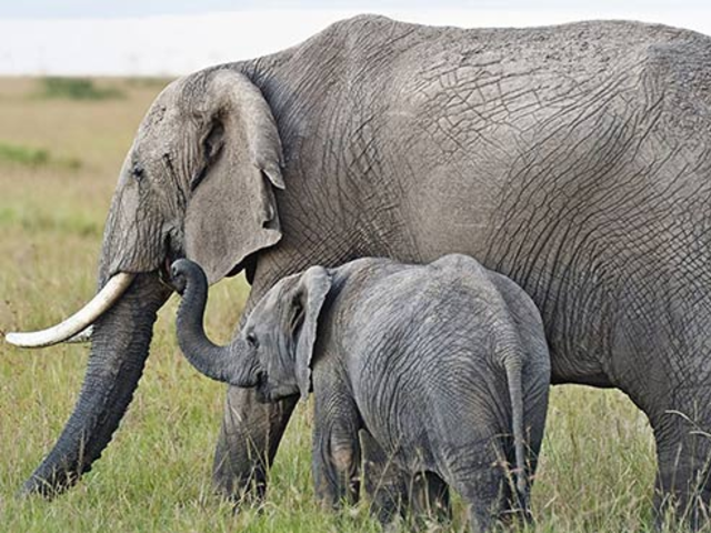 Luxurious Tented Safaris