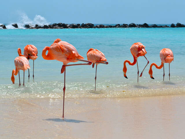 Travel Impressions - Save up to 27% in Aruba!