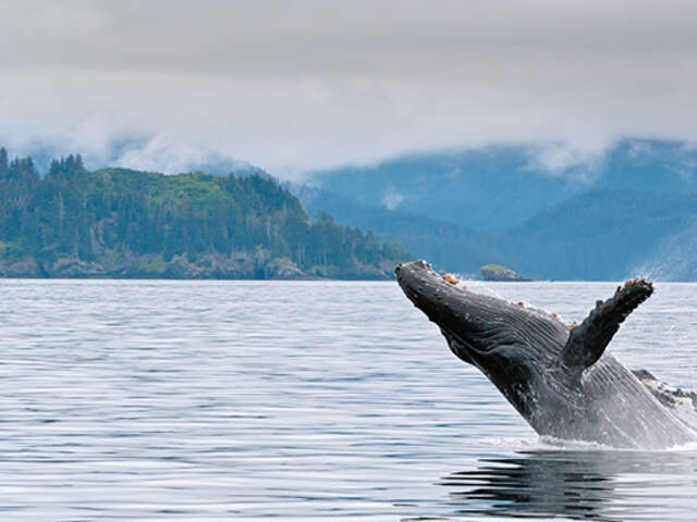 The Amazing Animals of Alaska