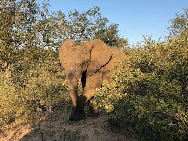10-Night South Africa CME Adventure